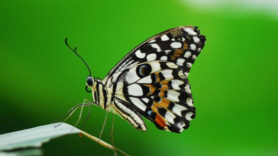 「蝶々と戦車」 アーネスト・ヘミングウェイ