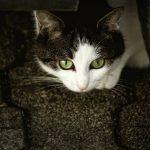 「雨の中の猫」 アーネスト・ヘミングウェイ
