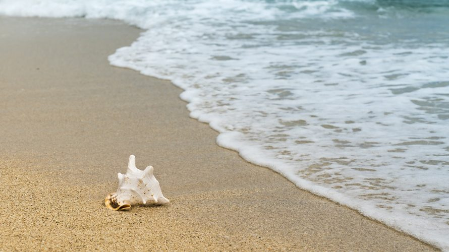 「貝を集める人」 アンソニー・ドーア