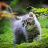 「雨の中の猫」(原書) アーネスト・ヘミングウェイ